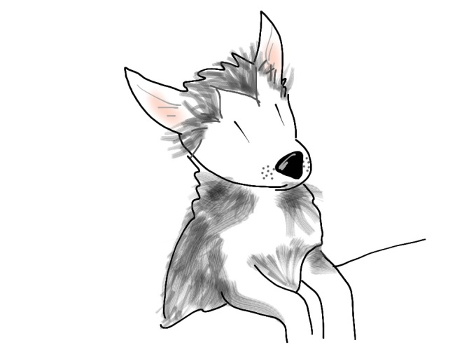 husky puppy cartoon