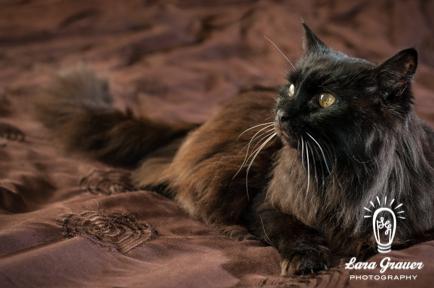 Grendel looking into distance on brown comforter